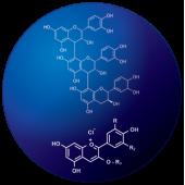 Mirtogenol® (2)